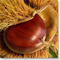 Castagna, castagne, marroni: proprietà della castagna | Benessere.com
