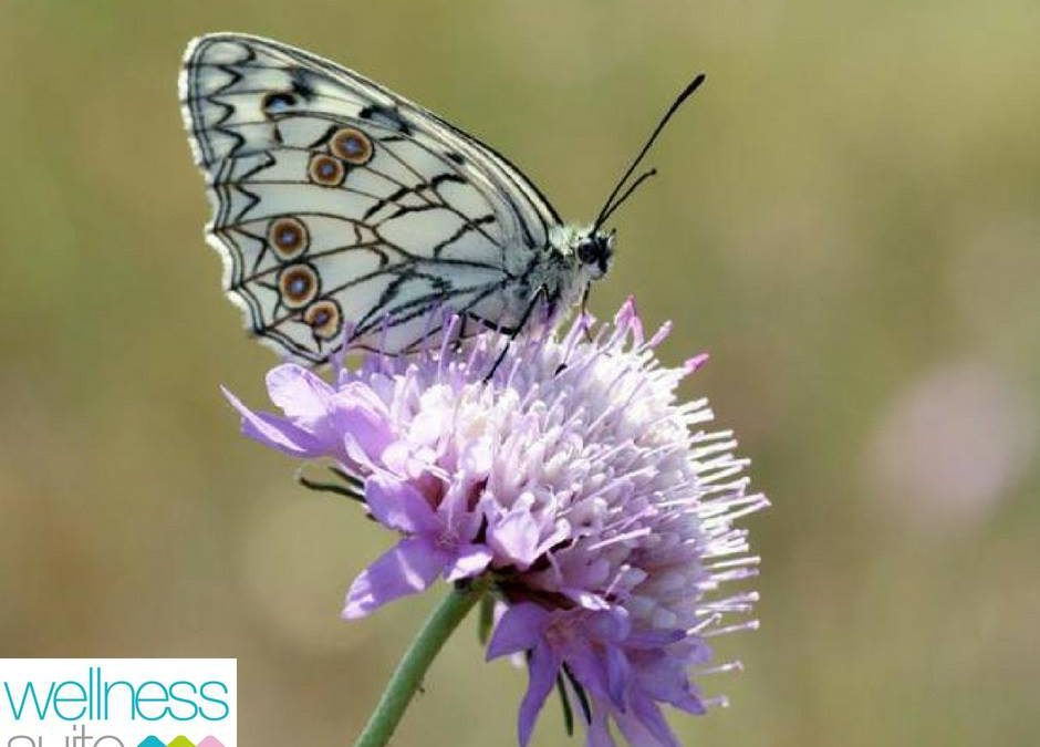 """LIFE STYLE  """"Se non cambiasse mai nulla, non ci sarebbero le farfalle."""" (anonimo…"""