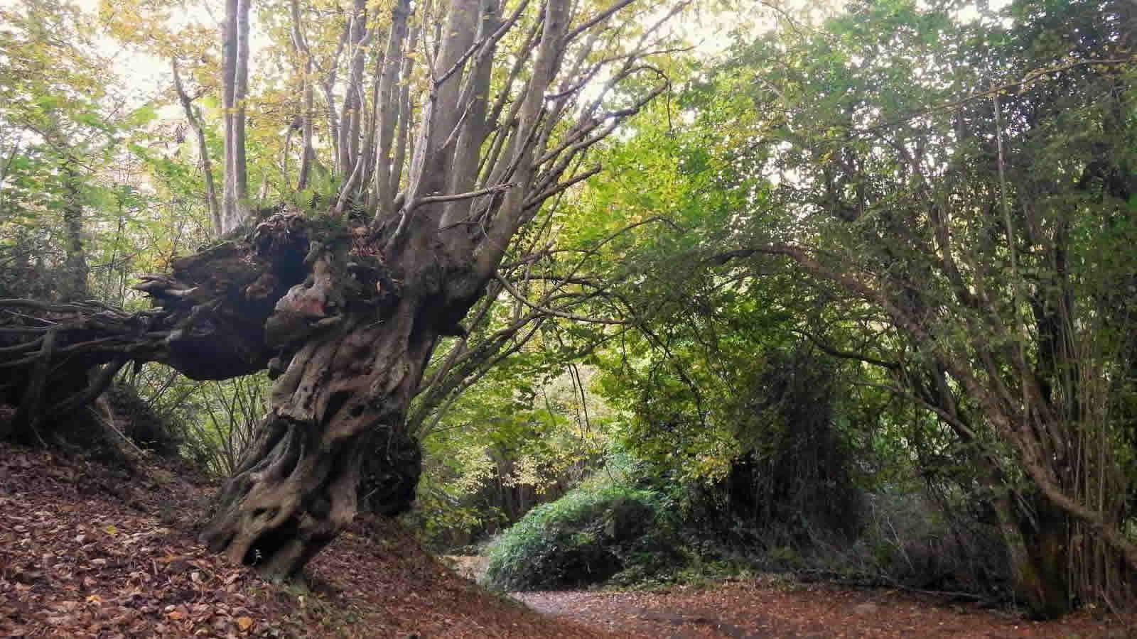 Immagini Di Piante E Alberi vuoi vivere felice? circondati di piante e alberi la